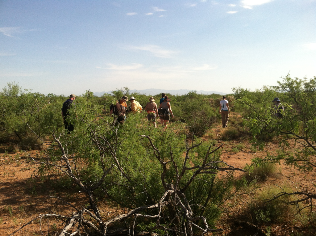 In the desert looking for cactus longhorn beetles