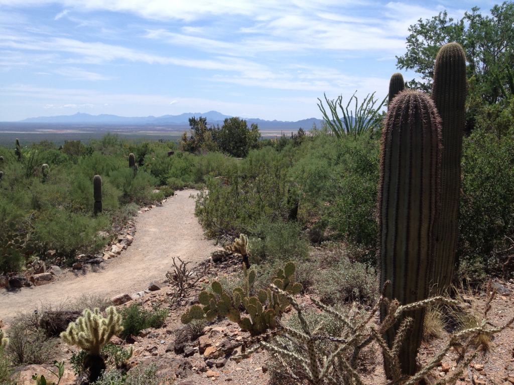 View from the Sonoran Desert Museum