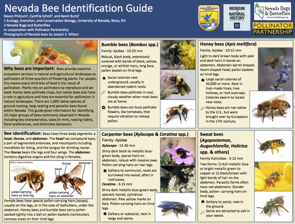 Nevada Bee Guide small size