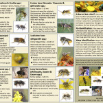 Nevada Bee Guide small size page 2